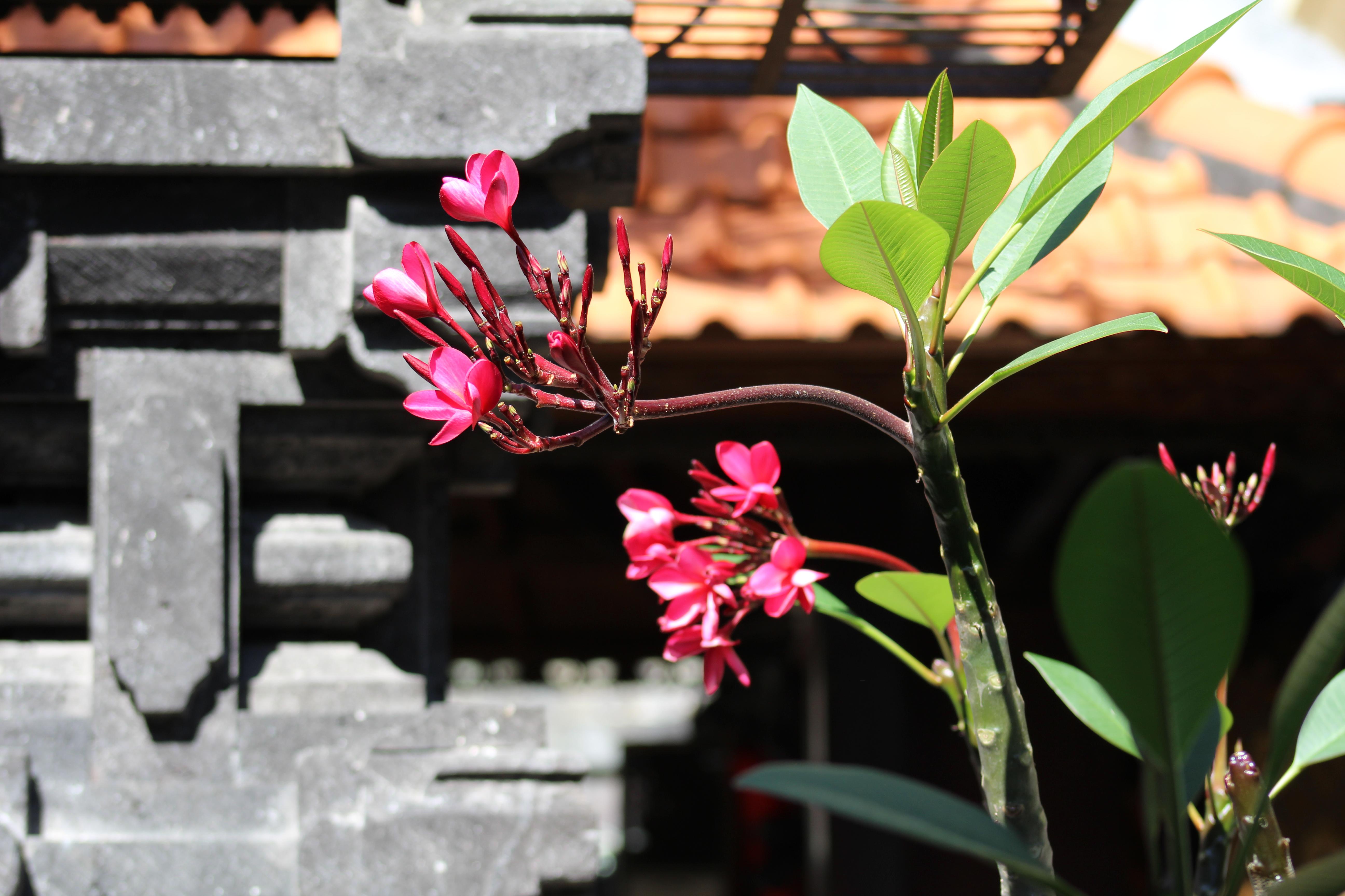 Kuta Temple flowers