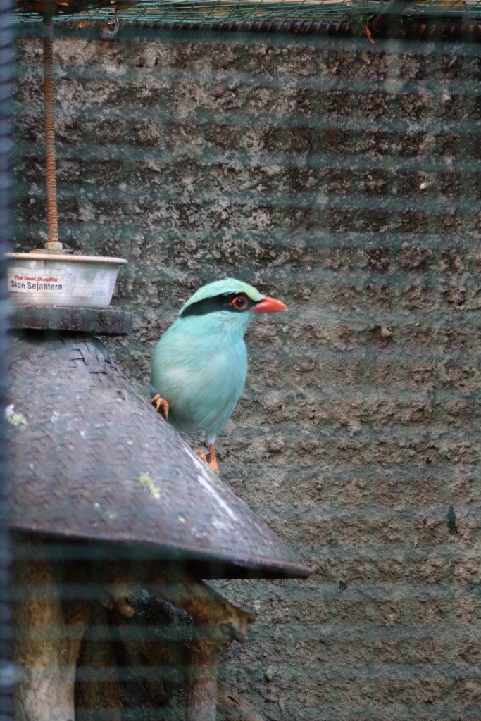 Turquiose Bird