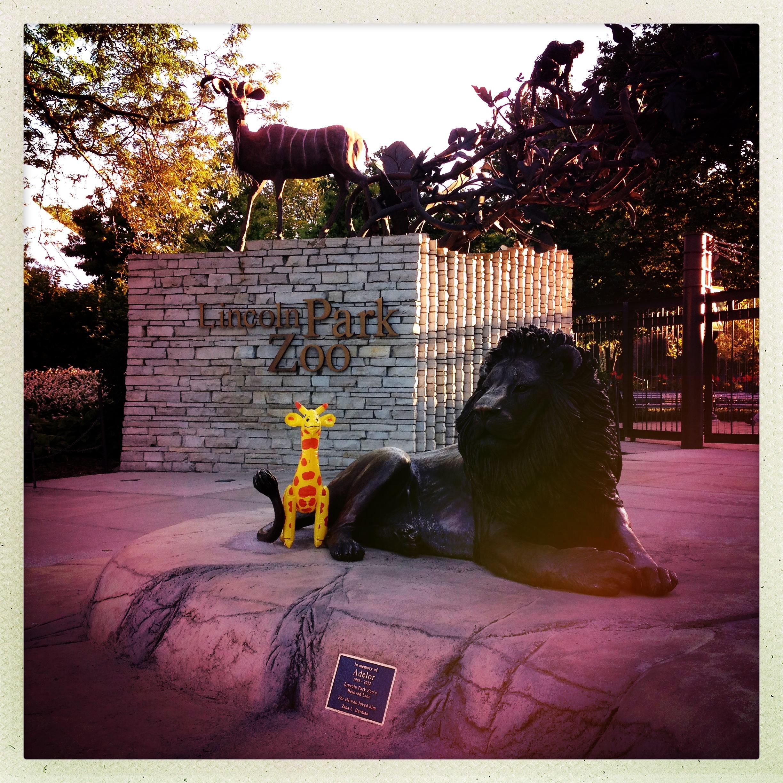Giraffle at Lincoln Park Zoo
