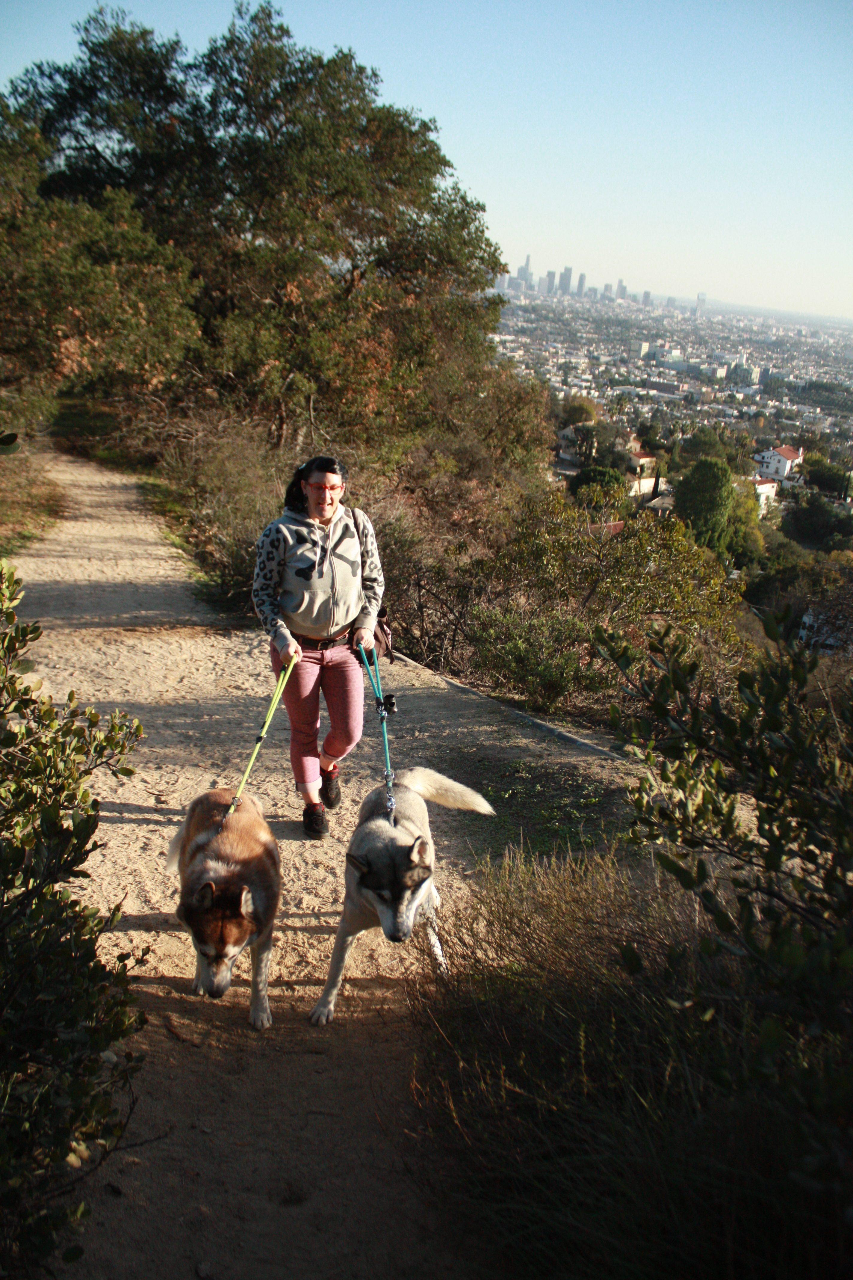 Walking the Huskies