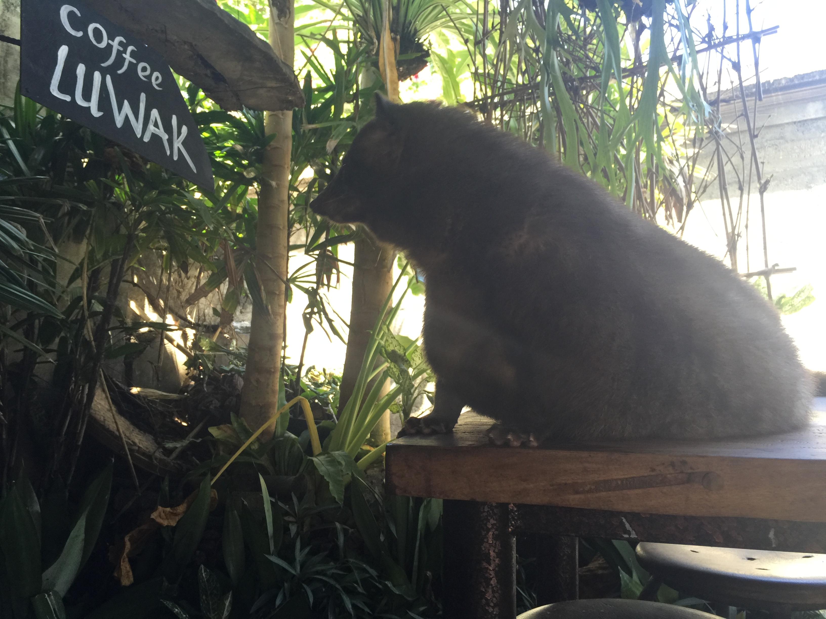 Civit Cat